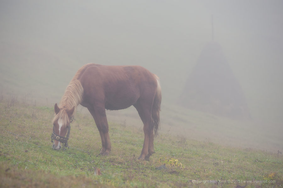 HorseFog