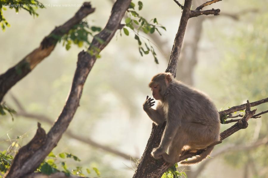 Monkey22