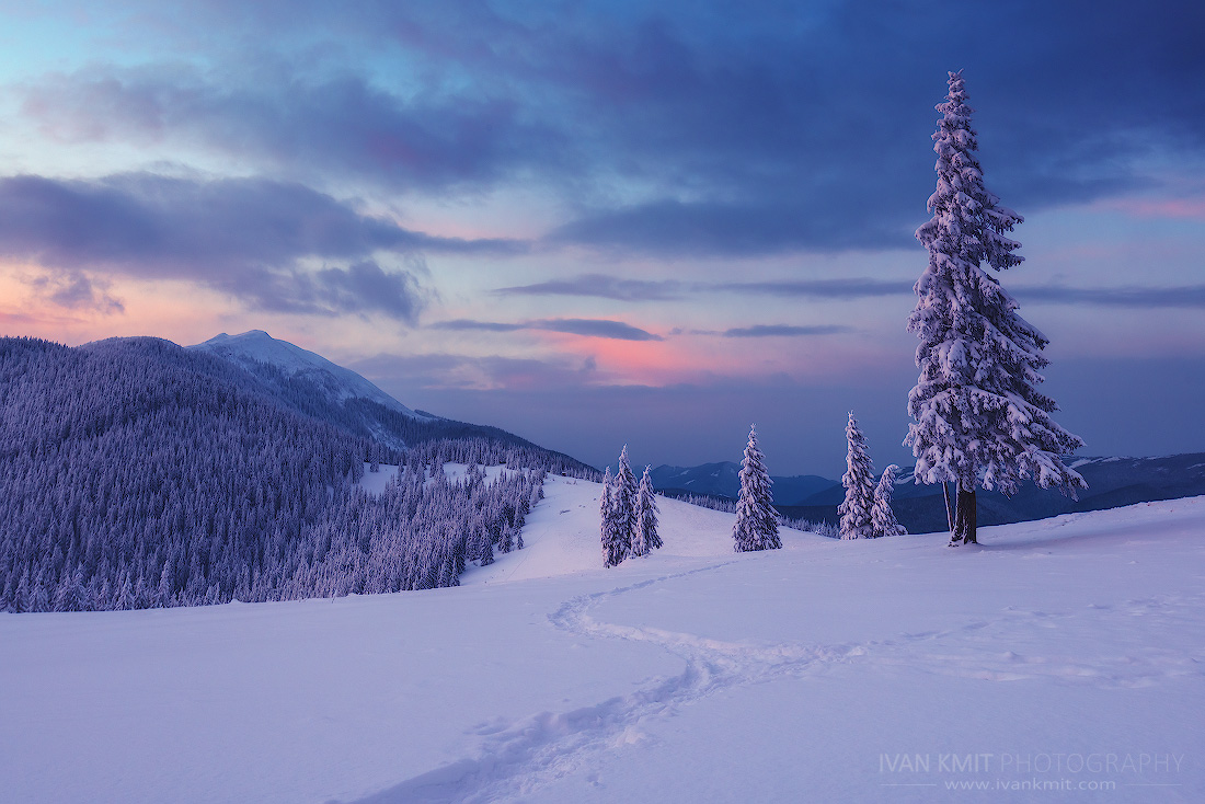winter50