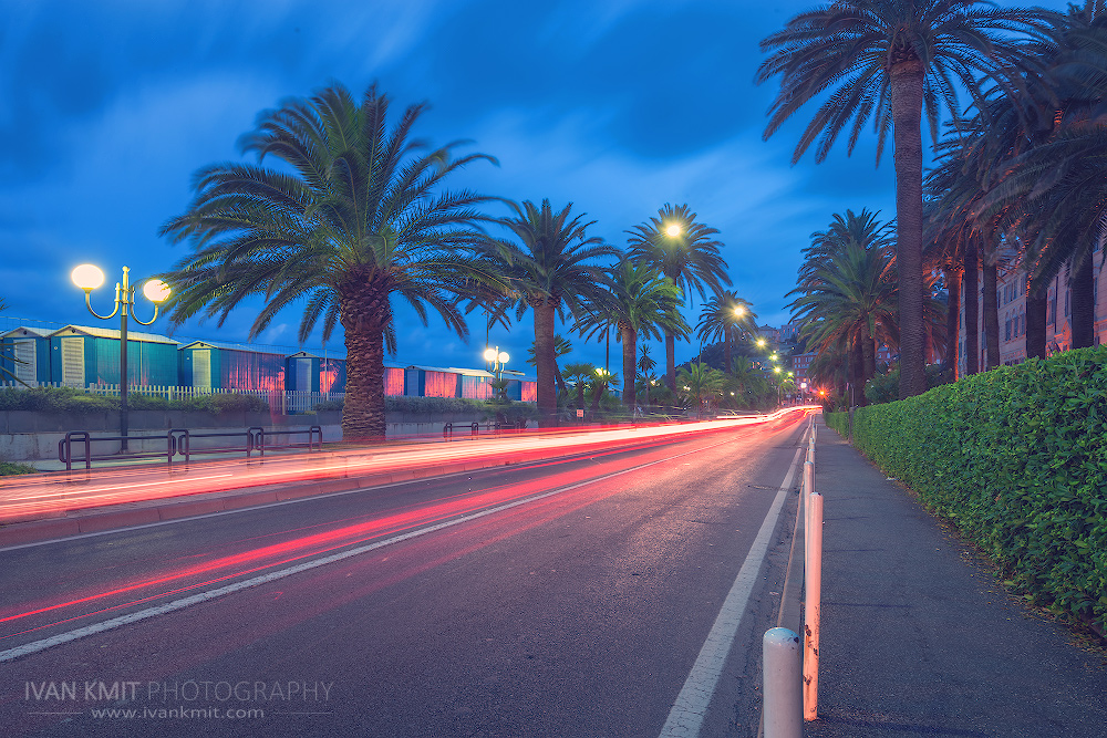 road_palm