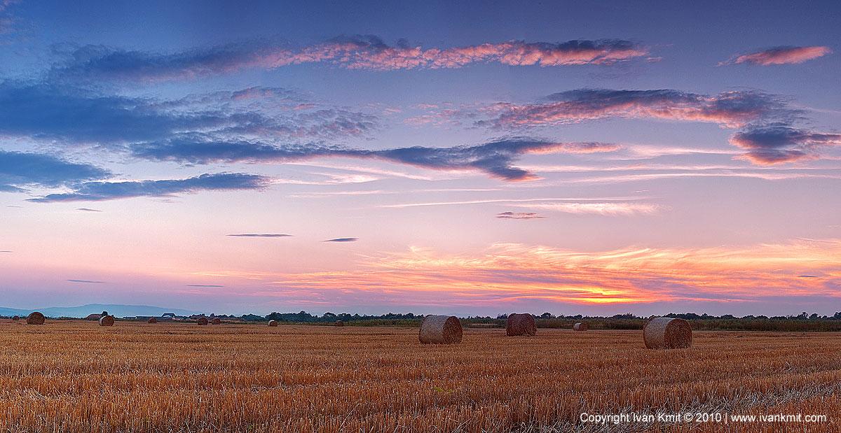 Wheat_field_sundown