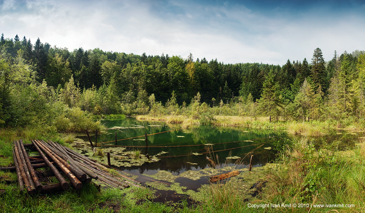 lake_in_forest