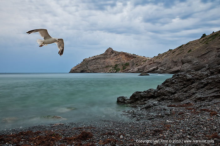 sea_landscape_gull