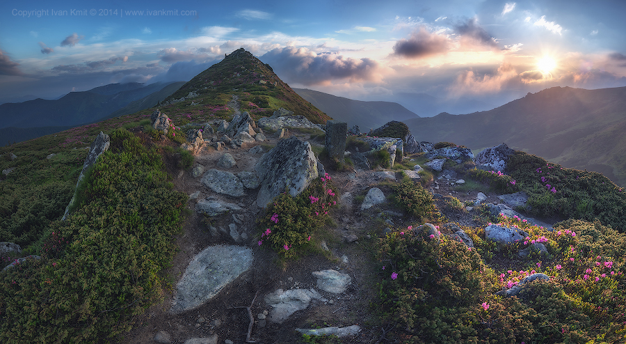 rhododendron_panorama